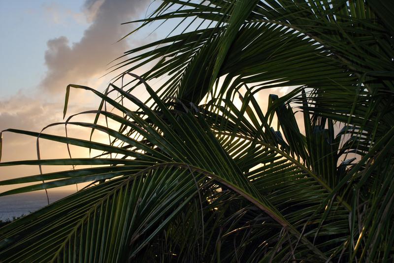 Palmondergaandezon