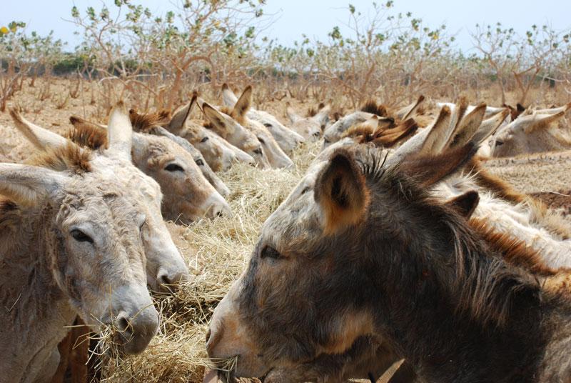 Donkey2_2